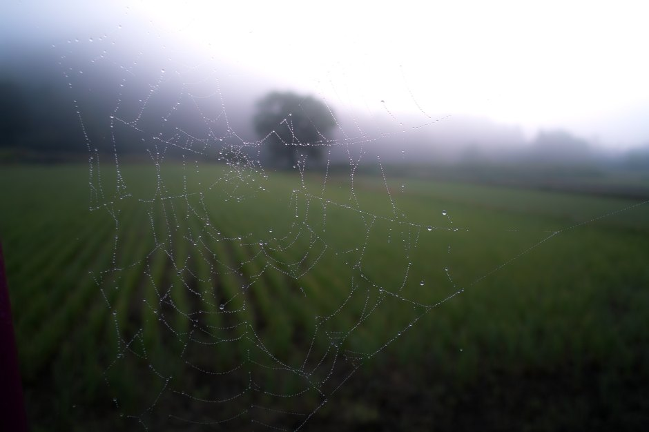 La Bibliothèque Italienne - Il sentiero dei nidi di ragno, de Italo Calvino